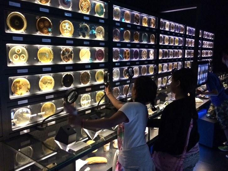 museo micropia