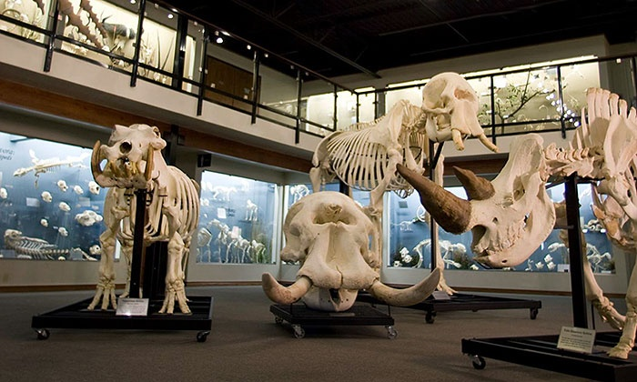 museo skeletons animals unveiled
