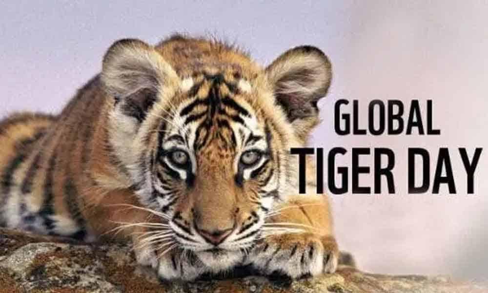 Cómo celebrar el Día Internacional del Tigre