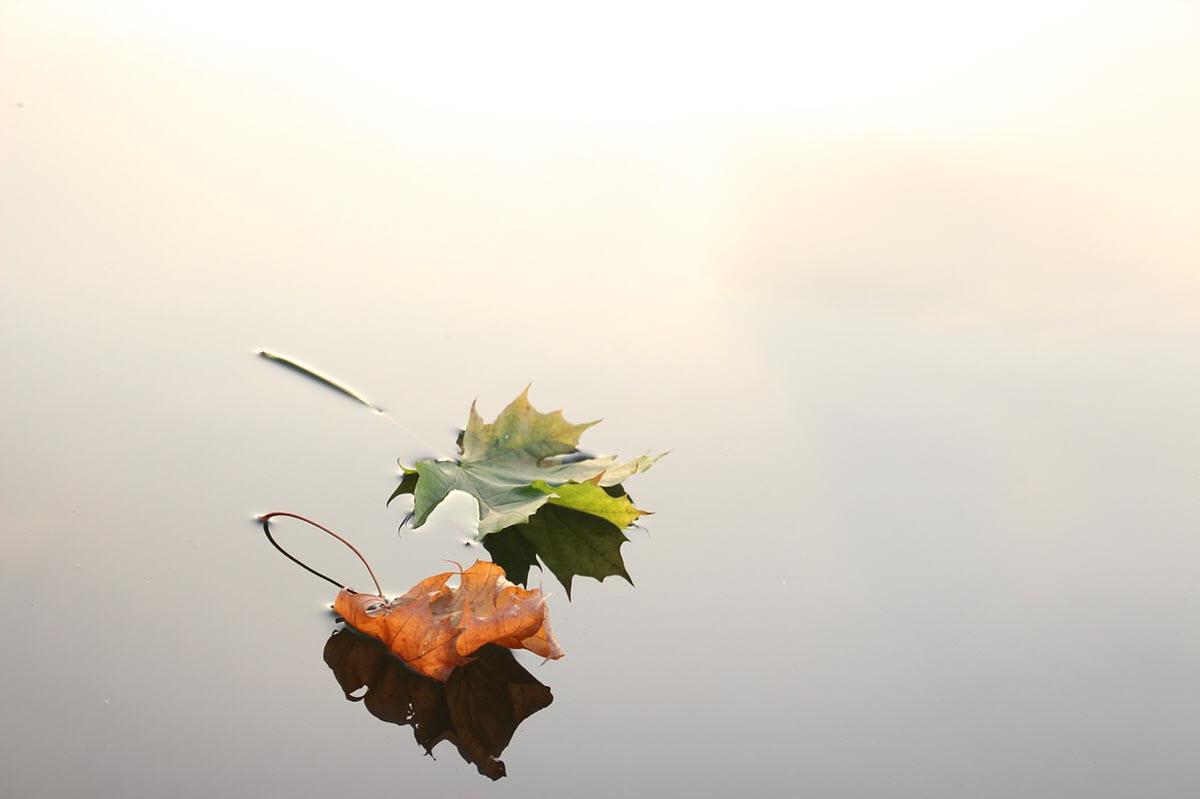 documentales de educación ambiental